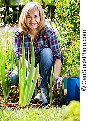Mature woman planting corn-flag flower in garden on sunny day