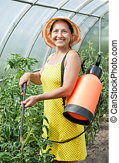 Mature woman spraying tomato plant