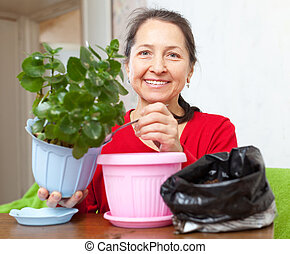 Mature woman transplants potted flower - Mature woman...