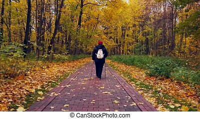 Mature woman walking Nordic Walk in a park at fall. Back...