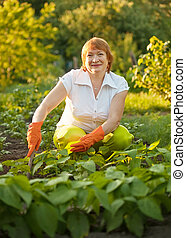 woman working in field of beans