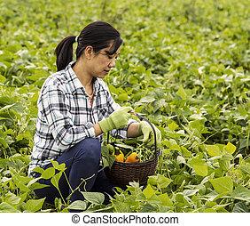 Mature women checking her basket of vegetables