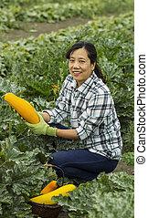Mature women harvesting vegetables
