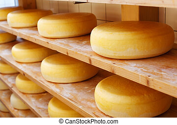 Matured cheese-wheels on shelves - Several mature cheese-...