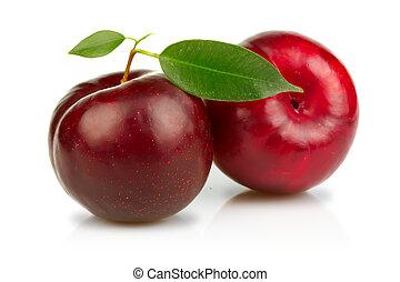 maturo, prugne, frutte, con, congedi verdi, isolato, bianco