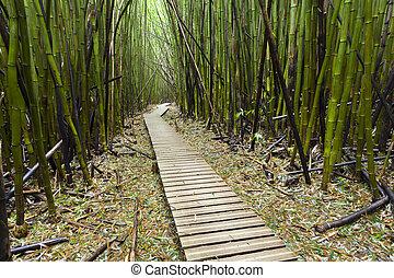 maui, bosque de bambú, hawaiano