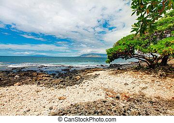 Maui. Hawaii. Tropical shore with rocks and tree.
