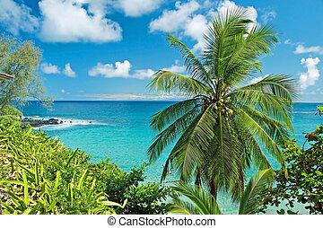 maui, ilha, havaí, paraisos