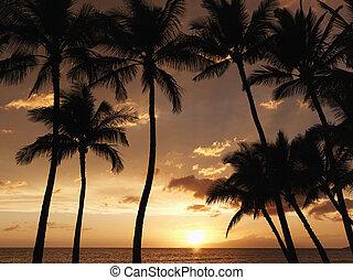 Maui palm trees at sunset.