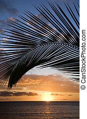 Maui sunset with palm tree. - Sunset sky framed by palm...
