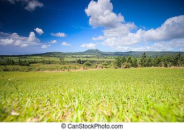 mauricio, paisaje
