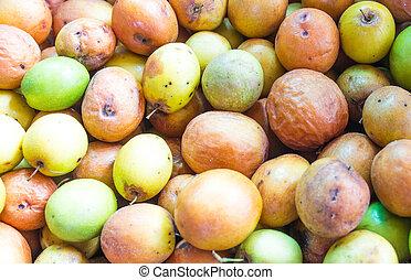 mauritiana, アップル, また, jujube, 知られている, ber, chinee, ziziphus