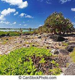 Mauritius. Stony landscape.  Island Gabriel.
