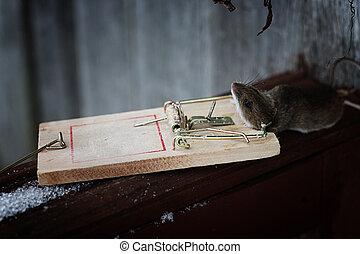 ratten falle ratte mausefalle klebstoff maus mausefalle. Black Bedroom Furniture Sets. Home Design Ideas
