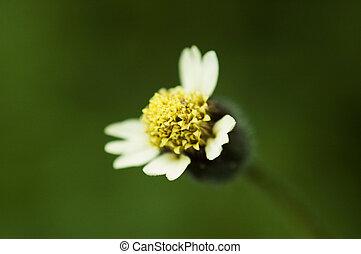 Fleur mauvaise herbe fleur jaune mauvaise herbe photographie de stock rechercher des - Mauvaise herbe fleur jaune ...