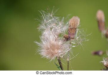 Fleur mauvaise herbe fleur jaune mauvaise herbe p tales tracks sous ferroviaire - Mauvaise herbe fleur jaune ...