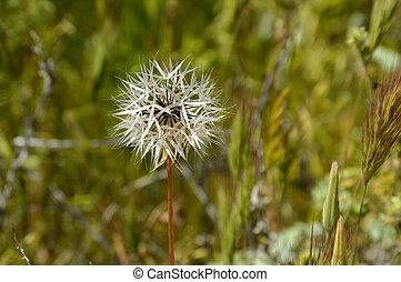 Fleur mauvaise herbe fleur jaune mauvaise herbe - Mauvaise herbe fleur jaune ...
