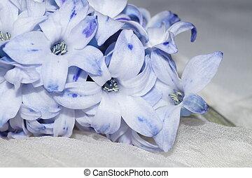 Mauve flower, hyacinth