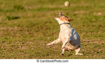 Max - my ball crazy best friend!
