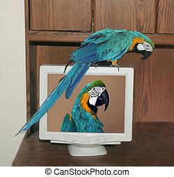 max on monitor