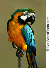 max the parrot
