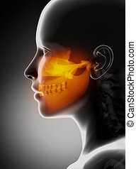 maxillofacial, röntga, begrepp, snackar