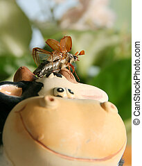 May beetle - Flying up may beetle on cow toy in garden