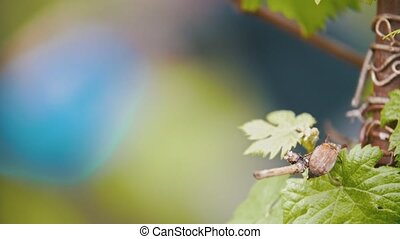 May bug crawling on a leaf, in the background girl watering...