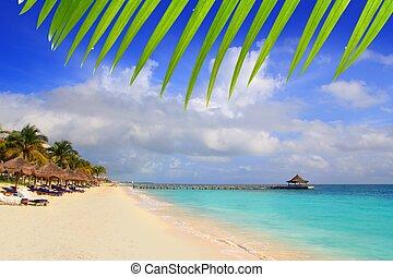 maya, antilles, riviera, toit ouvrant, arbres, plage paume