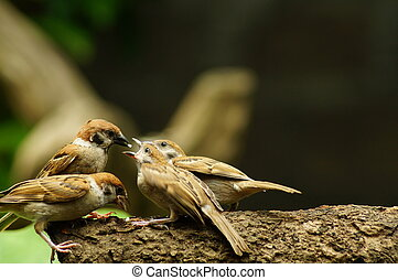 Maya Bird Mouth Feeding other bird