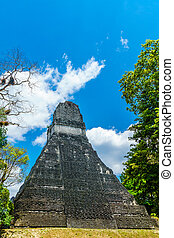 Maya pyramid in the rainforest by Tikal