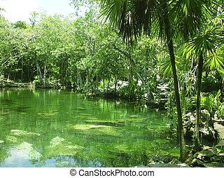maya, roo, riviera, mayan, selva, cenote, quintana