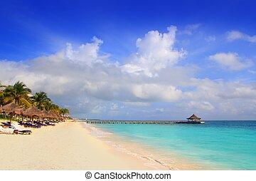 mayan, caraíbas, riviera, sunroof, árvores, praia palma