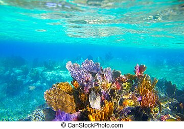 Mayan Riviera reef snorkel underwater coral paradise - Mayan...