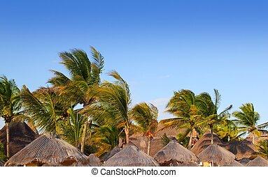 Mayan riviera tropical sunroof palm trees blue sky