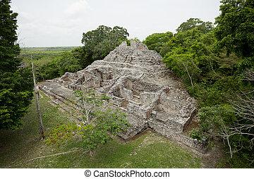 mayan ruinent, pyramide, entouré, jungle