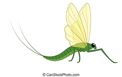 Mayfly Vector Insect Illustration
