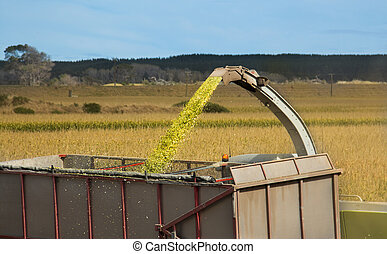 Maze Harvest