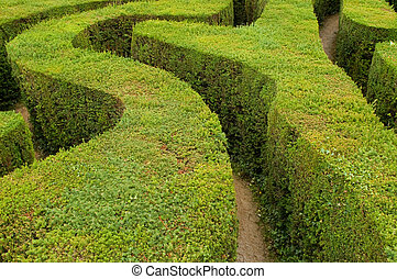 maze hedges - tracks of a swirling maze leading nowhere