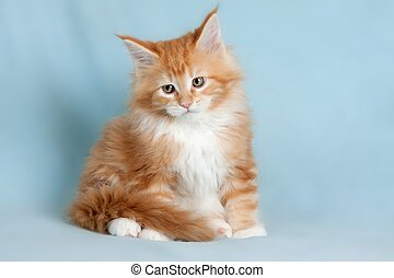 mazlíček, kočka