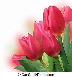 mazzolino, bello, tulips., rosso