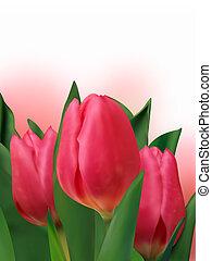 mazzolino, fresco, tulips.