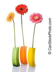 mazzolino, isolato, vaso, vetro, daisy-gerbera, bianco