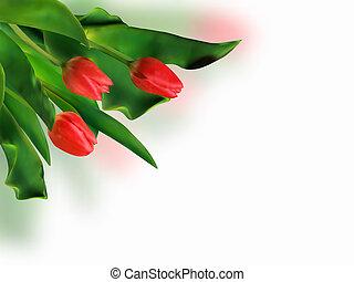mazzolino, primavera, tulips., rosso