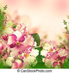 mazzolino, primavera, violette, fondo, floreale