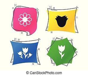 mazzolino, simbolo., icons., rose, vettore, fiori