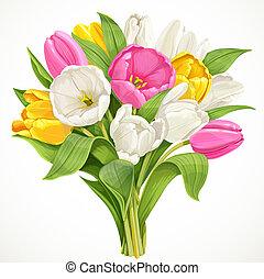 mazzolino, tulips, bianco, isolato, fondo