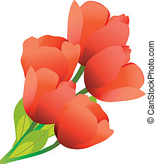 mazzolino, tulips