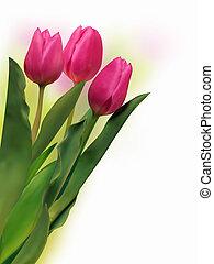 mazzolino, tulips, fresco