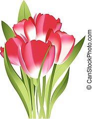 mazzolino, tulips, rosso